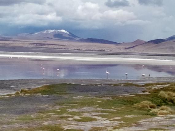 Flamingoer ved den røde lagune