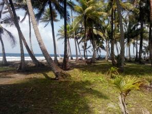Palmeskog
