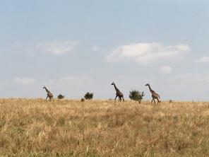 Girafflokk