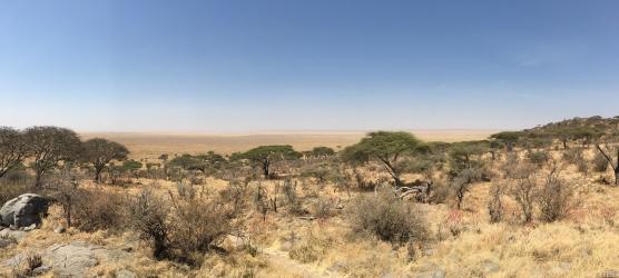 Savanne til horisonten