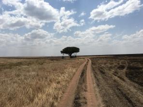 Tre på savannen