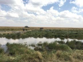 Elefanter nært vannhull