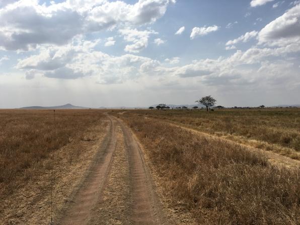 Vei på Serengeti