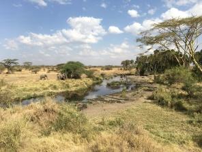 Vannhull og elefanter