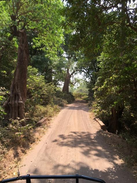 Vei gjennom regnskogen